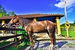 Piękno koń Minas Gerais zdjęcia royalty free