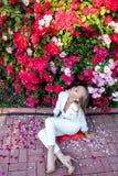 Piękno kobieta z wiązka kwiatami Fotografia Stock