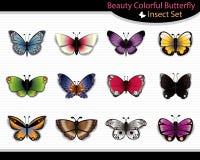 Piękno Kolorowy Motyli insekt Ustawiający - wektor Ilustracja Wektor