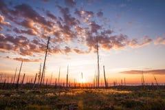 Piękno komes od desolation zdjęcie stock