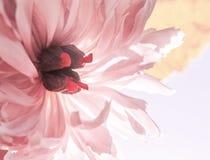Piękno kwiatu tło Zdjęcia Stock