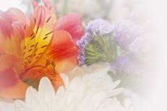 Piękno kwiaty, barwi i kształtuje Zdjęcia Stock