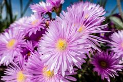 Piękno kwiaty wiosna obraz royalty free