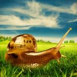 Piękno letni dzień na gospodarstwie rolnym Zdjęcie Stock