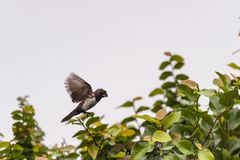 Piękno mały ptak Obrazy Royalty Free