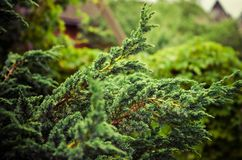 piękno natura środowisko, ekologia, rośliny i ogrodnictwa pojęcie -, obraz stock