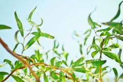 piękno natura środowisko, ekologia, rośliny i ogrodnictwa pojęcie -, zdjęcia stock