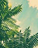piękno natura środowisko, ekologia, rośliny i ogrodnictwa pojęcie -, zdjęcia royalty free