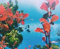 piękno natura środowisko, ekologia, rośliny i ogrodnictwa pojęcie -, obrazy stock