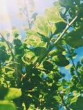 piękno natura środowisko, ekologia, rośliny i ogrodnictwa pojęcie -, zdjęcie stock
