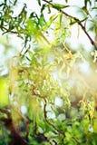 piękno natura środowisko, ekologia, rośliny i ogrodnictwa pojęcie -, fotografia stock