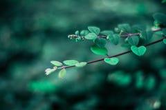 piękno natura środowisko, ekologia, rośliny i ogrodnictwa pojęcie -, obrazy royalty free