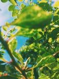 piękno natura środowisko, ekologia, rośliny i ogrodnictwa pojęcie -, zdjęcie royalty free