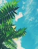 piękno natura środowisko, ekologia, rośliny i ogrodnictwa pojęcie -, fotografia royalty free