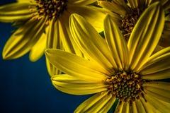 Piękno natura zdjęcie royalty free