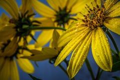 Piękno natura zdjęcia stock