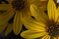 Piękno natura obrazy stock