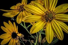 Piękno natura obrazy royalty free