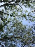 Piękno natura brzoza w jesieni obrazy stock