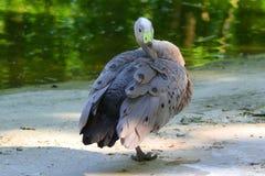 Piękno natura Ukraina kaczka w na wolnym powietrzu jest bardzo piękny obraz stock