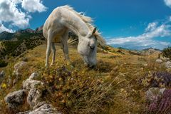 Piękno natury góry krajobraz z białym koniem zdjęcia royalty free