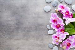 Piękno orchidea na szarym tle Zdrój scena zdjęcie stock