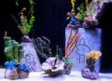 Piękno podwodny świat zdjęcia royalty free