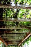 Piękno sufit struktura fotografia stock