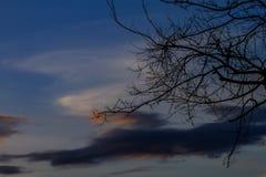 Piękno sylwetki gałąź z niebem przy zmierzchu tłem Zdjęcia Stock