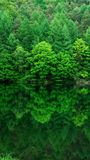 Piękno wśród natury obraz royalty free