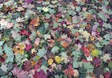 Piękno wiosny dekoraci purpur sezonu lata flor ogródu jaskrawego spadku koloru żółtego wzoru rośliny zielonego koloru tekstury ko Zdjęcia Royalty Free