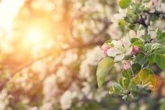 Piękno wiosny natury tło zdjęcia stock