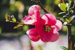 Piękno wokoło my fotografia stock
