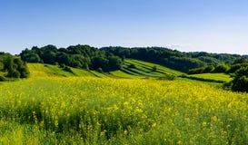 Piękno zieleni wzgórza w Polska fotografia stock