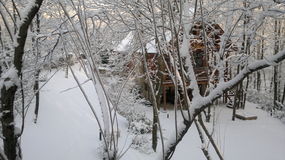 Piękno zima Obraz Royalty Free