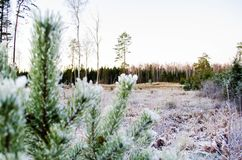 Piękno zima kolory Otanki, Latvia zdjęcia stock