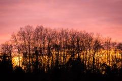 Piękno zmierzchu drzewa obraz royalty free