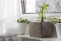 Piękny łazienki okno parapet Zdjęcie Stock