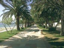 Piękny ślad z drzewkami palmowymi, oleandery Miejsce relaksować i cieszyć się idealny natury Zdjęcie Stock