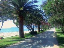 Piękny ślad z drzewkami palmowymi, oleandery Miejsce relaksować i cieszyć się idealny natury Zdjęcie Royalty Free
