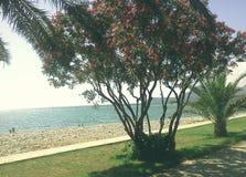 Piękny ślad z drzewkami palmowymi, oleandery Miejsce relaksować i cieszyć się idealny natury Obrazy Royalty Free