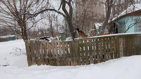 Piękny śliczny czarny i brown psi zwierzę domowe przyjaciel plenerowy w zimy pozyci na białym śniegu przy żelaza ogrodzeniem zama zbiory wideo