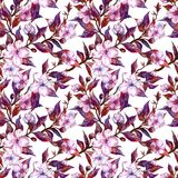 Piękny śliwkowy drzewo kapuje w kwiacie na białym tle Menchia kwiaty i liście czerwieni i purpur kwiecista deseniowa bezszwowa wi Zdjęcie Stock