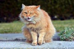 Piękny śmieszny kot zdjęcie royalty free