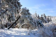 piękny śnieg Zdjęcia Royalty Free