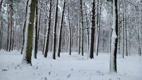 Piękny śnieg zakrywał dzikiego las, natury rezerwacja, zima krajobraz, widok zbiory