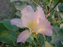 Piękny światło - różowy kwiat obraz stock
