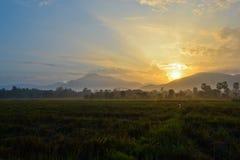 Piękny światło słoneczne i ryż uprawiamy ziemię na ranku czasie Fotografia Stock