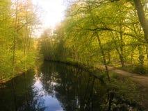 piękny światło słoneczne w wiośnie podczas lasowego spaceru przy jeziorem si Obrazy Royalty Free