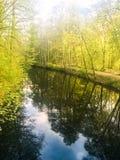 piękny światło słoneczne w wiośnie podczas lasowego spaceru przy jeziorem si Zdjęcie Stock